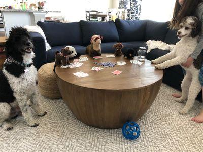 dogs don't like poker, 2020