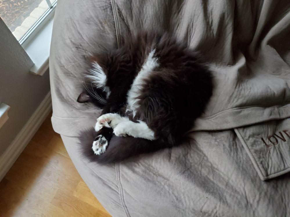 My cat doing QA on a the bean bag.