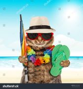 stock-photo-funny-cat-going-on-vacation-296302682.jpg