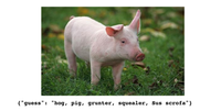 pig-with-classification.png