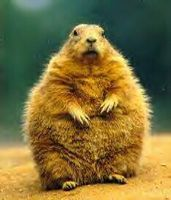 bloated-gopher.jpg