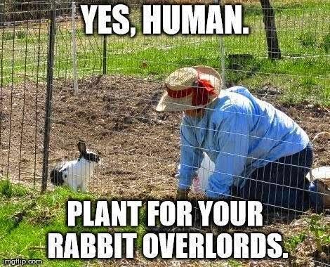 RabbitFunny.jpg