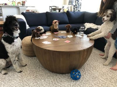 dogs don't like poker, 2020
