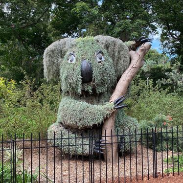 Possible epicormic growth on a giant koala (unconfirmed) in the Sydney Royal Botanic Gardens. Credit: @MaddieJ
