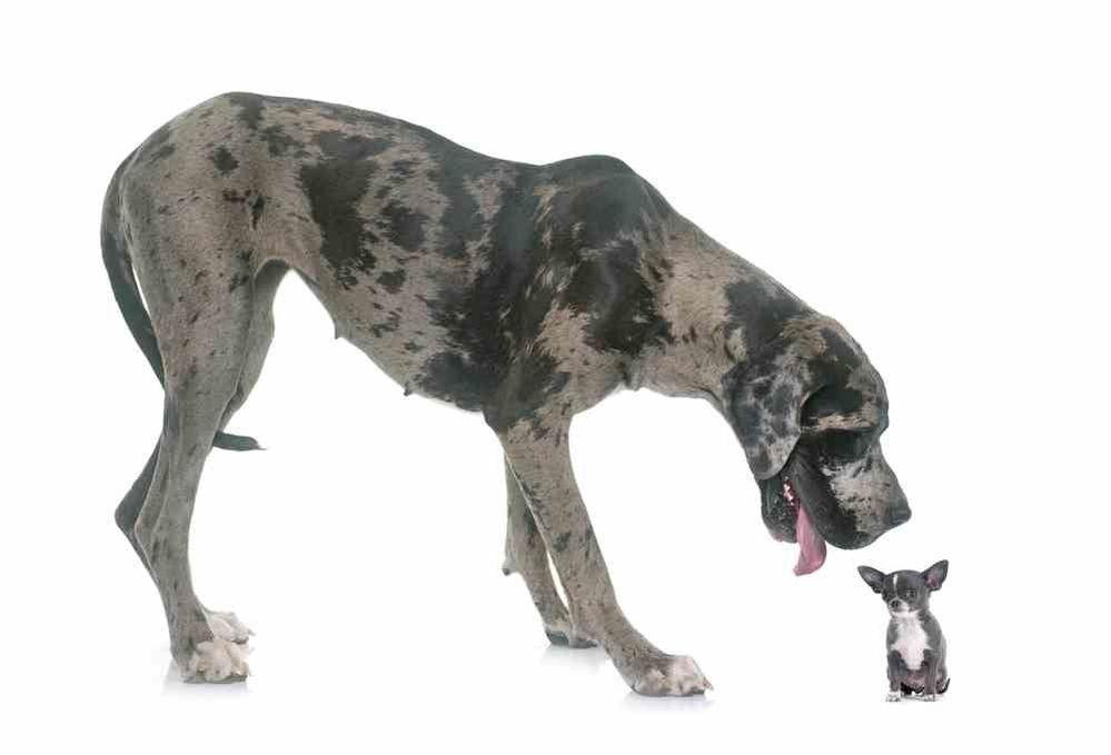 breeds.jpg